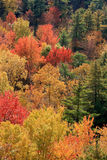 Ontario Autumn Foliage Royalty Free Stock Photography