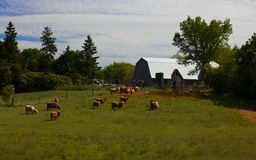 Ontario Cattle Farm Stock Photos