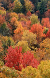 Ontario Fall Foliage Stock Images