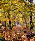Ontario nedgång Royaltyfria Foton