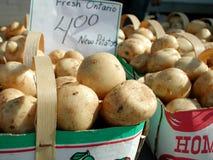 ontario potatisar Royaltyfria Foton