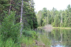Ontario strumień Obraz Royalty Free