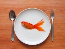 Ontbijt en goudvis Stock Fotografie