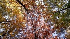 Ontbladering in het bos stock videobeelden