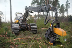 Ontbossing stock afbeelding