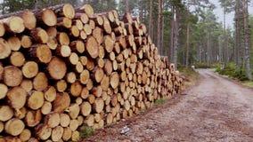Ontbossing die - sparren in het hout verminderen stock footage