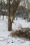 Ontbossing en vernietigde boom, hout stock foto