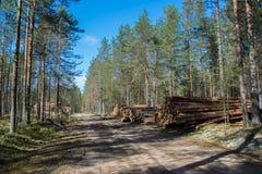 Ontbossing in het gebied van Leningrad stock fotografie
