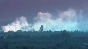 ontbossing Het registreren en het branden het envrionmental probleem van de regenwoud Bosbrand stock video
