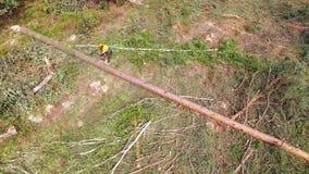 ontbossing Houtbewerkingsfabriek De arbeider zaagt een boom, snijdt een hout Houthakker die een pijnboom, berk verminderen felled stock footage