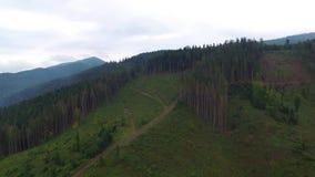 ontbossing Luchtdiehommelmening van bos in de Oekraïne wordt vernietigd stock footage
