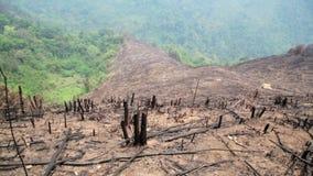 Ontbossing, na bosbrand, natuurramp stock videobeelden