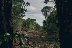 Ontbossing van een tropisch regenwoud stock afbeeldingen