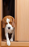 Ontbrekende hond Stock Fotografie