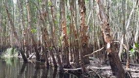Ontdek het Melaleuca-bos door boot stock videobeelden