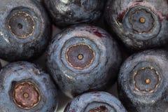 Ontdooide bosbessen Macro close-up ondiepe diepte van mening Royalty-vrije Stock Foto's