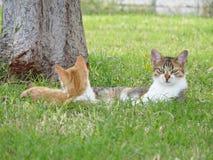 Ontevreden katten, katten en natuurlijke achtergrond stock fotografie