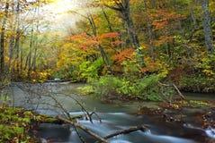ontluik, zen, hemel, zachte boom, pruim, groen blad, whi royalty-vrije stock afbeelding