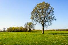 Ontluikende grote boom in een grote weide met verse groene gras en ye stock foto