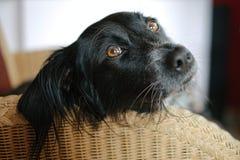 Ontmoet Donna, een bastaarde, verdwaalde die hond in een weide op het Griekse Eiland Lesbos wordt gevonden Stock Afbeelding