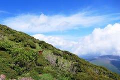Ontmoet met een hert bovenop MT Karakunidake, Ebino-kogen, Japan royalty-vrije stock afbeelding