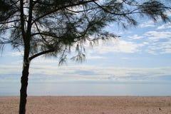 Ontruim Blauwe hemel, Blauwe overzees, strand, wolk, een pijnboomboom Royalty-vrije Stock Foto
