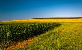Ontruim blauwe hemel over graangebieden op een landbouwbedrijf in de Zuidelijke Telling van York stock afbeeldingen