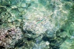Ontruim overzees om de vissen onder water te zien stock fotografie