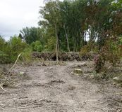 Ontruimd gebied van een oeverbos stock fotografie