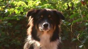 Ontschorsende hond stock videobeelden