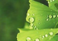 Ontspan groene achtergrond royalty-vrije stock foto's
