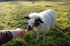 Ontspan in landbouwbedrijf met dieren Stock Fotografie