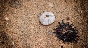 Ontspan op het strand Royalty-vrije Stock Foto's