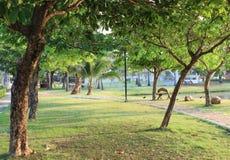 Ontspan park in ochtend stock foto