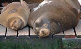 Ontspannen in de Baai van San Francisco Royalty-vrije Stock Foto's