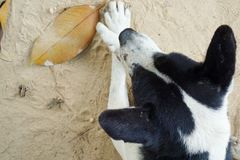 Ontspannen hond op het zandstrand, stock foto