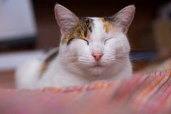 Ontspannen kat Stock Afbeeldingen