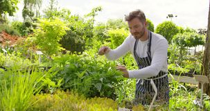 Ontspannen mens die met installaties in tuin werken stock footage