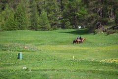 Ontspannen middag Horseride Royalty-vrije Stock Afbeelding