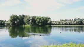Ontspannend punt in het midden van een stedelijk park met vijver met wilde eenden stock footage