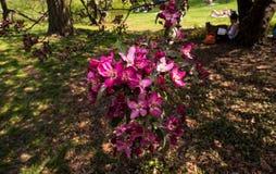 Ontspannende de lentedag in het park royalty-vrije stock afbeeldingen