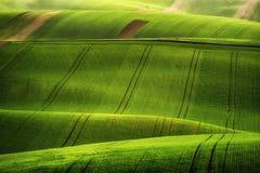 Ontspannende tijd op de rollende heuvels van Moravië met tarwe filds en tractor Royalty-vrije Stock Afbeelding