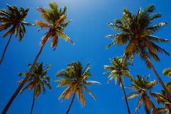 Ontspanning onder kokospalmen in keerkringen Stock Afbeelding