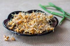 Ontsproten korrel van tarwe, gezonde en smakelijke voedsel, additief aan zout stock afbeeldingen