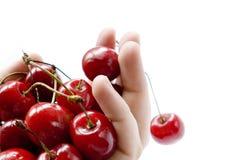 Ontsproten van handvol rode kersen op wit Stock Foto's