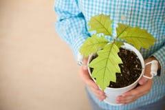 Ontspruit een jonge eiken boom in een kind overhandigt Het concept - het het levensbegin, zorg, de succesvolle toekomstige groei stock foto