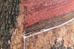 Onttrokken rubberboom royalty-vrije stock foto