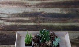 Ontwerp groene installaties op uitstekende houten lijst, exemplaar ruimtebanner Royalty-vrije Stock Foto's