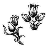 Ontwerp van Tulp en bladeren Stock Afbeelding