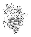 Ontwerpelement - druiven in de vorm van een hart Stock Foto